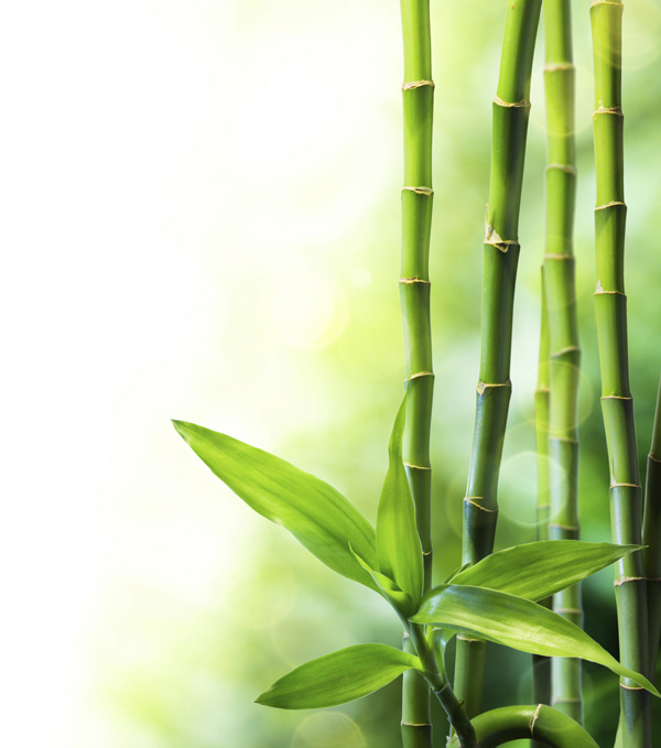 bamboo_stalks_green_eco-friendly_sustainable